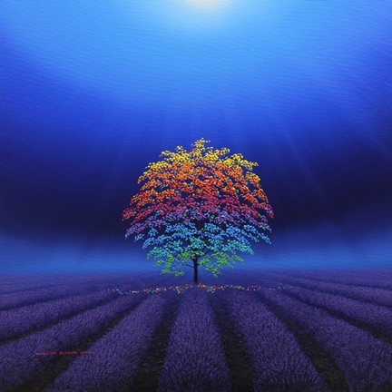 Rainbow Tree In a Field of Lavender