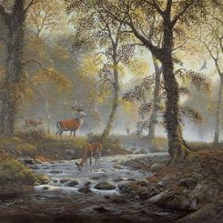 Autumn Deer at Horner Woods