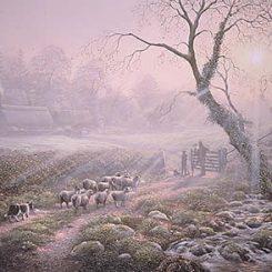 Shepherds Apprentice