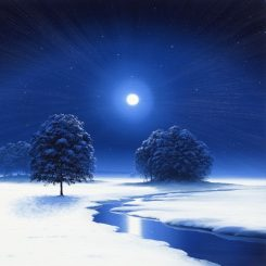 Moonlit Trees in Winter